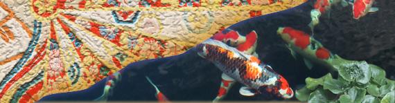 錦鯉の飼育について 錦鯉 福岡県北九州市 販売