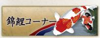 錦鯉コーナー 錦鯉 福岡県北九州市 販売