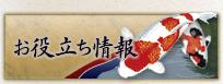お役立ち情報 錦鯉 福岡県北九州市 販売
