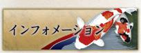 インフォメーション 錦鯉 福岡県北九州市 販売